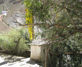 de heilige boom van Rinchen Zangpo